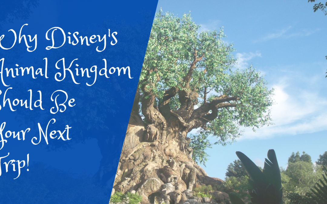 Why Disney's Animal Kingdom Should Be Your Next Trip!